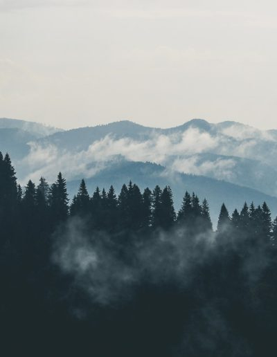 clouds-fog-forest-9754-min