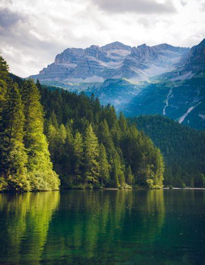 conifers-daylight-environment-1666021-min